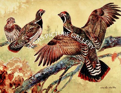 Fine Art Print of the Spruce Grouse by Charles Defeo (1891-1978)